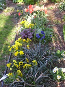 Pansies and perennials in the Shorecrest secret garden