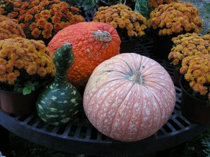 North Fork pumpkins