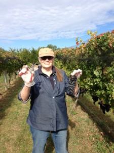 I'm participating in the Sannino Vine to Wine program