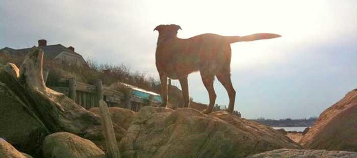 Ike-the-Wonder-dog---Glory-shot