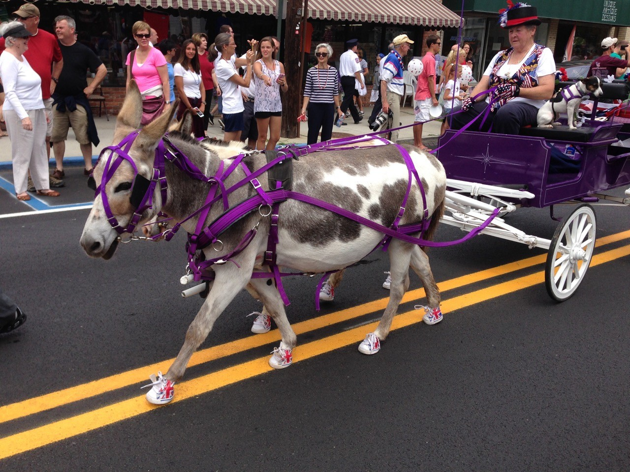 Horse in Southold 4th July parade